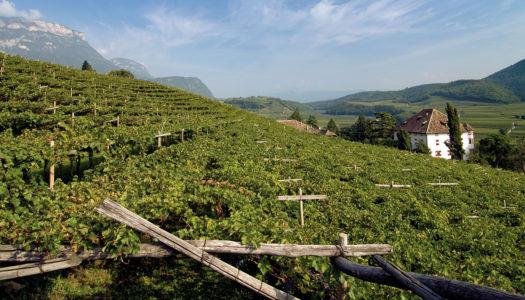 Enoturismo del vino