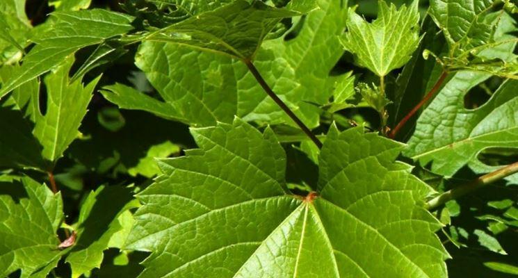 Rüyada Yeşil Asma Yaprağı Toplamak Yemek