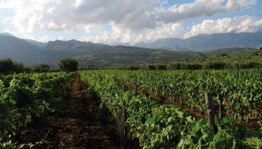 Calabria del vino, Barra dritta verso gli autoctoni