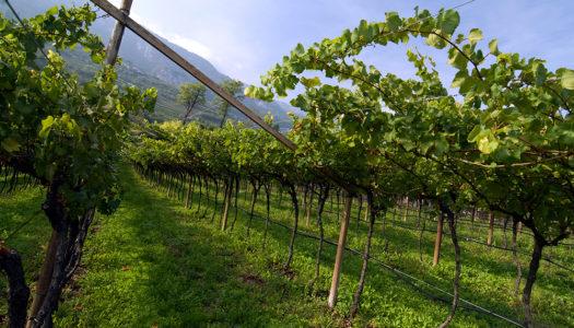 Il Marzemino di Mozart nella valle green