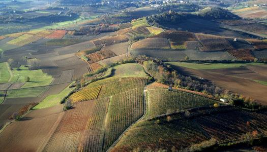 Barbera,  Il vino che svela il Monferrato