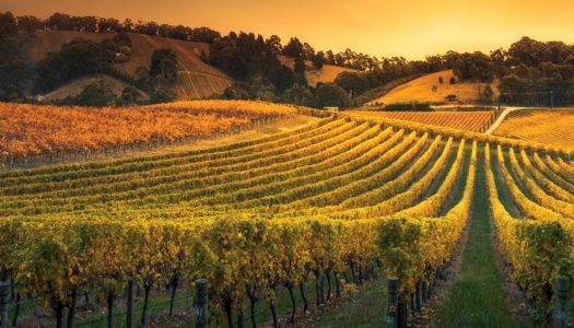 L'offerta formativa di 24ORE Business School dedicata agli imprenditori del vino