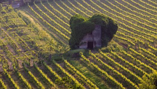 Onav e Vinibuoni presentano il Lazio
