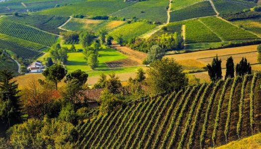 Cantina di Vinchio – Vaglio Serra