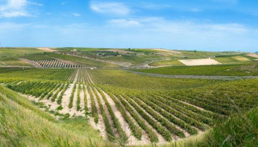 Caruso & Minini – Terre Siciliane Igt Perricone